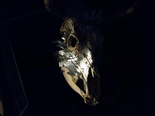 41° Experience - Crâne